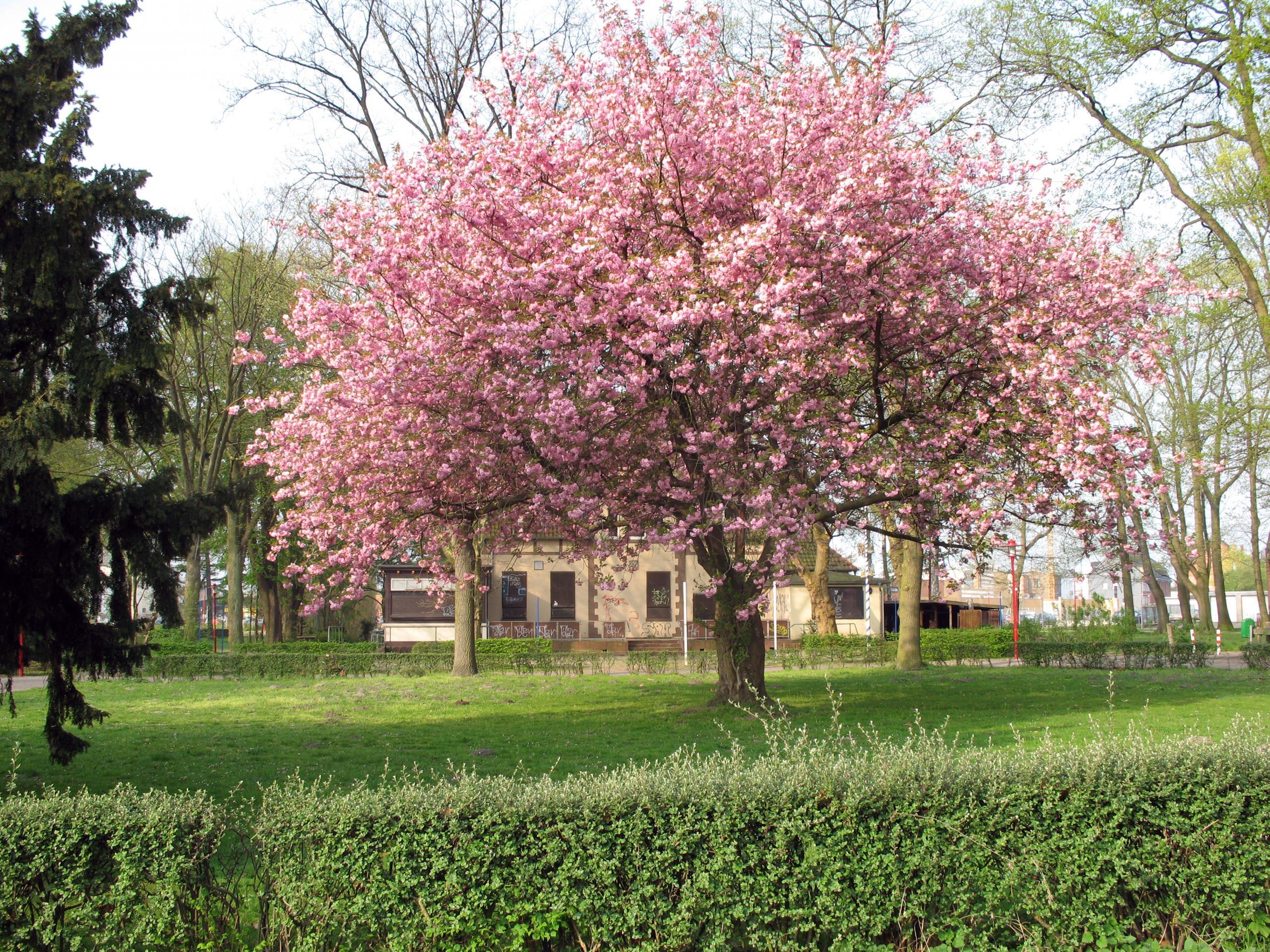 2007.04.17. Alter Stadtpark 002 ©Stadt Lehrte