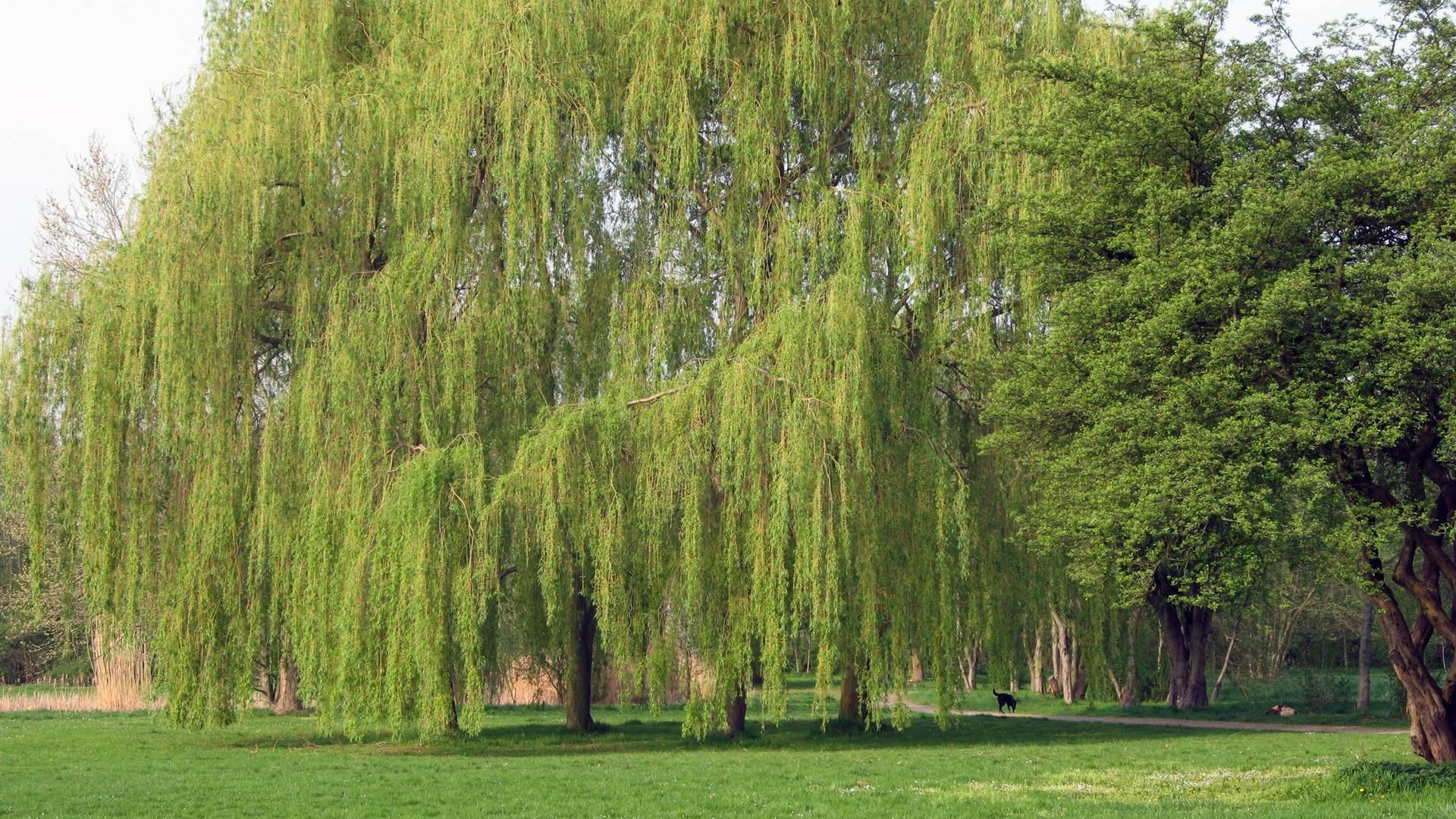 2007.04.17. Neuer Stadtpark 009 ©Stadt Lehrte